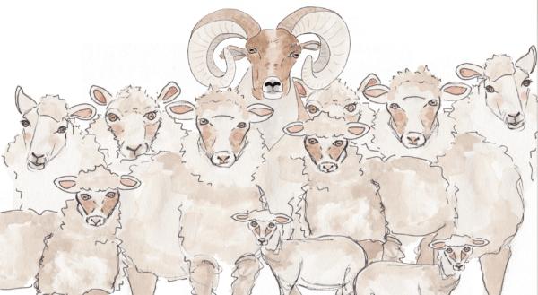 Wild & Wool
